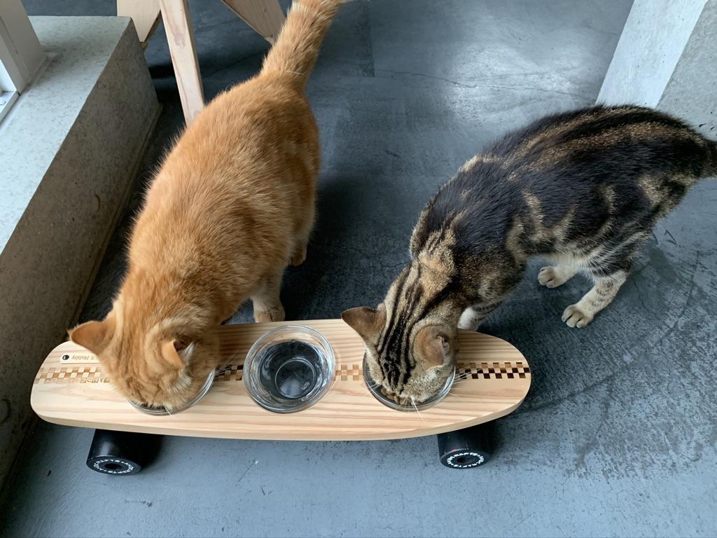 -pet bowls stand-